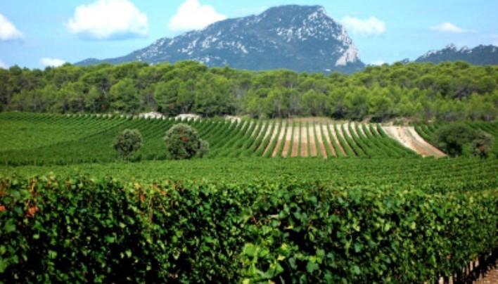 Wines of France Tasting 1-8-11
