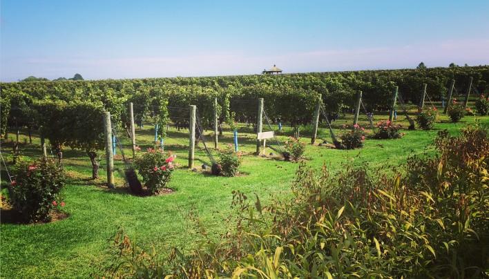 Anniversary Long Island Wine Weekend